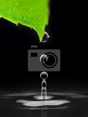 kapky vody padající dolů ze zeleného listí, izolované na černém