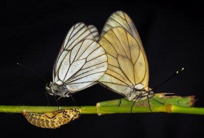 Obraz Kelebekler