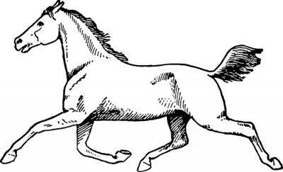 Obraz Klasická kresba koně
