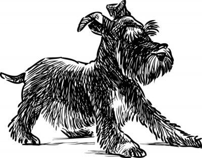 Obraz knírač štěně
