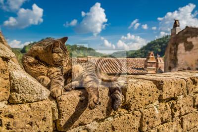 Kočka ležící na kamenné zdi
