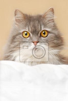 kočka na lůžku