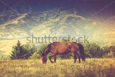 Obraz Koně pasou po horách. Podzimní krajina. Filtrovaný obraz: křížově zpracovaný vinobraní efekt.