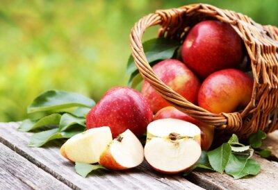 Obraz Koš s čerstvými jablky