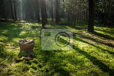 Koš s houbami v lese