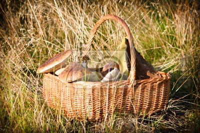 Košík s hříbky na podzim