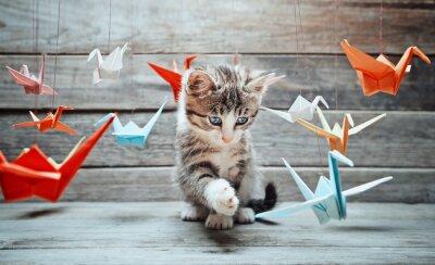 Obraz Kotě si hraje s papírovými jeřáby