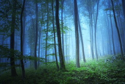 Obraz Kouzelné modrá barva světlo v mystickém lese