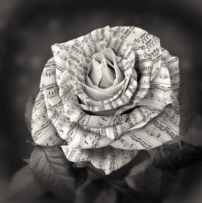 Obraz Krásné černé a bílé růže s poznámkou na plátky