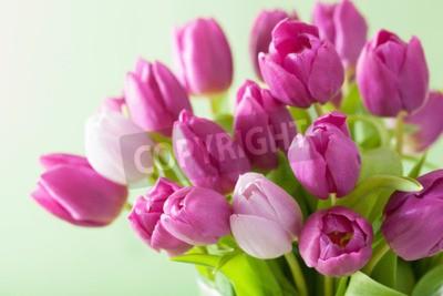 Obraz krásné fialové květy tulipánů pozadí