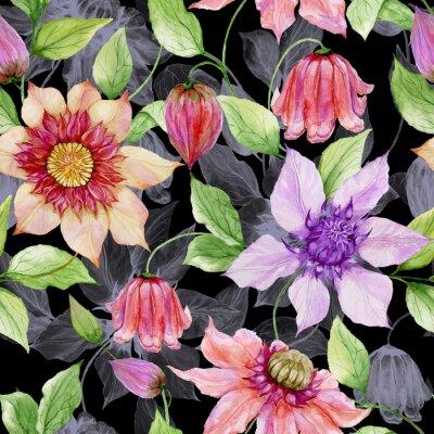 Obraz Krásné klematické květy na lezení větví proti černému pozadí. Bezešvé květinovým vzorem. Akvarel malovat. Ručně malovaná ilustrace.