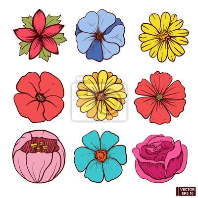 Krasne Kvetiny Kresleni Rukou Obrazy Na Stenu Obrazy Serik