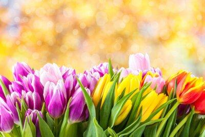 Obraz Krásné květy tulipánů