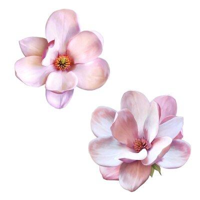 Obraz krásné magnolie, jaro květina
