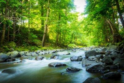 Obraz Krásný snový horský potok v lese