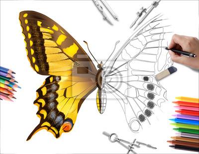 Kresba Motyl Obrazy Na Stenu Obrazy Krida Pridatny Skica