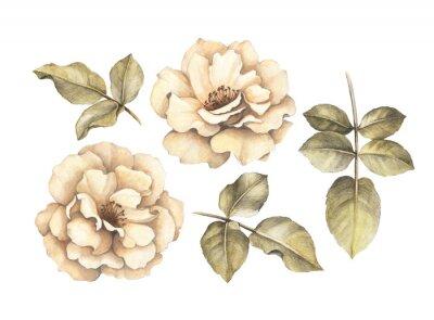 Obraz Kresba tužkou růží