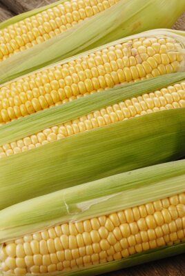Obraz kukuřičný klas