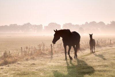 Obraz Kůň a hříbě siluety v mlze