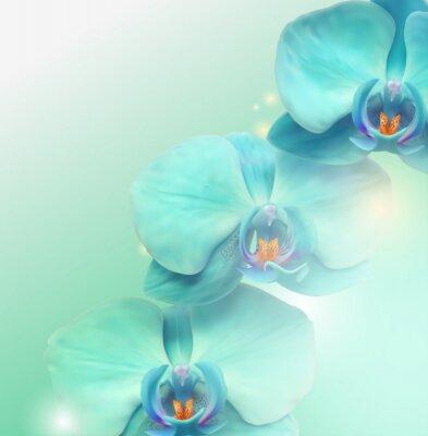 Obraz květ Orchid pozadí