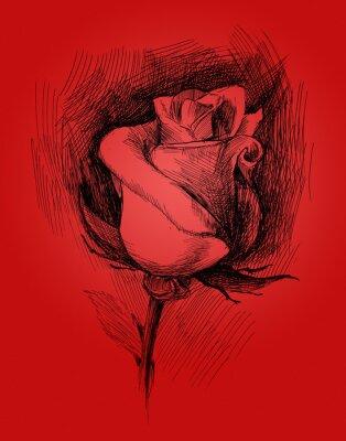 Obraz květina skica