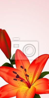 Obraz Květinové karta či banner s dvojbarevný lilií