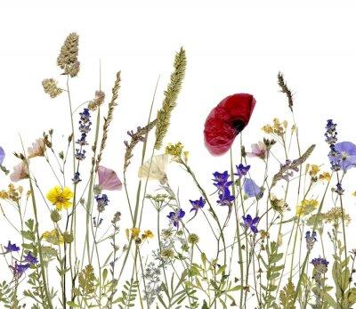 Obraz květiny a byliny