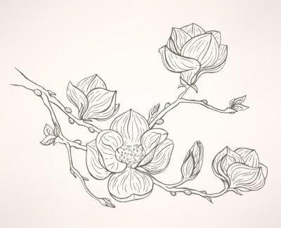 Obraz kvetoucí magnólie