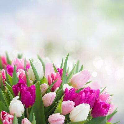 Obraz kytice z růžové, fialové a bílé tulipány