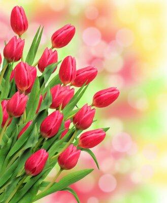 Obraz Kytice z růžové tulipány na světlém pozadí přírody
