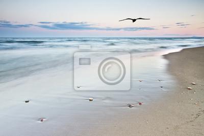 Obraz la playa de la gabiota