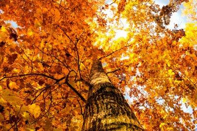 Obraz leaf žlutý