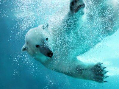 Obraz Lední medvěd pod vodou útok