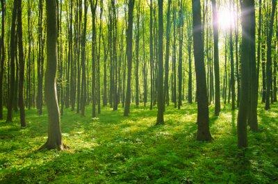 Obraz les na jaře