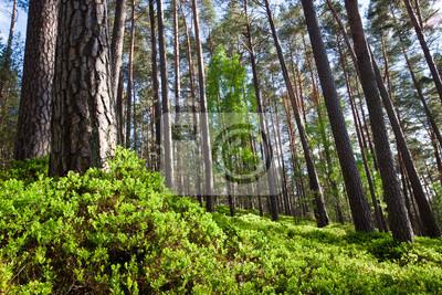 Les v národním parku