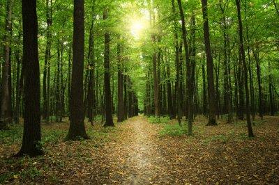 Obraz Lesa s slunečního světla