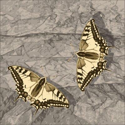 Obraz Létající motýl na grunge zeď.