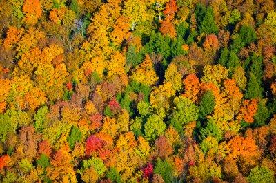 Obraz Letecký pohled na podzim listí ve Vermontu.