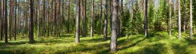 Obraz Letní les panorama