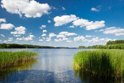Letní pohled na jezero v parku