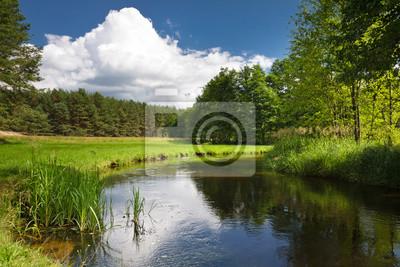 Letní pohled na řece v lese