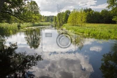 Letní pohled na řeku
