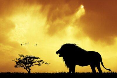 Obraz Lev silueta při západu slunce