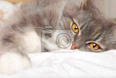 ležící kočka