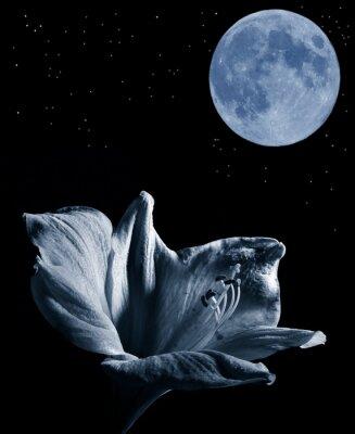 Obraz lilly a měsíc