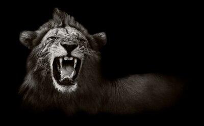 Obraz Lion zobrazení nebezpečné zuby