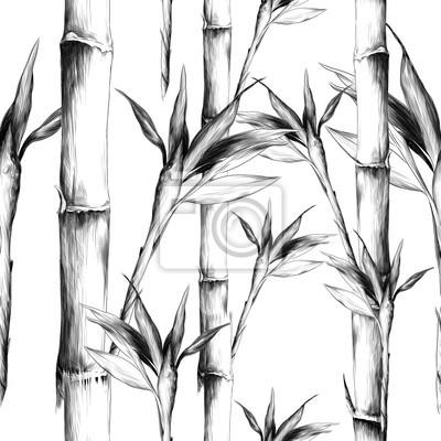 Obraz listy větví stonek bambusu vzor květiny textury rám bezešvé skica vektorové grafiky monochromatické černé a bílé kresby