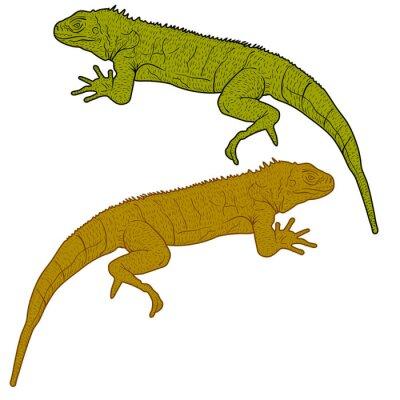 Obraz Lizard je goanna siluetu na bílém pozadí. vektorové ilustrace
