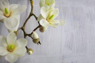 Obraz Magnolia Flower květ