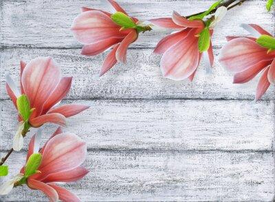 Obraz Magnólie květiny na pozadí ošumělých dřevěných prken
